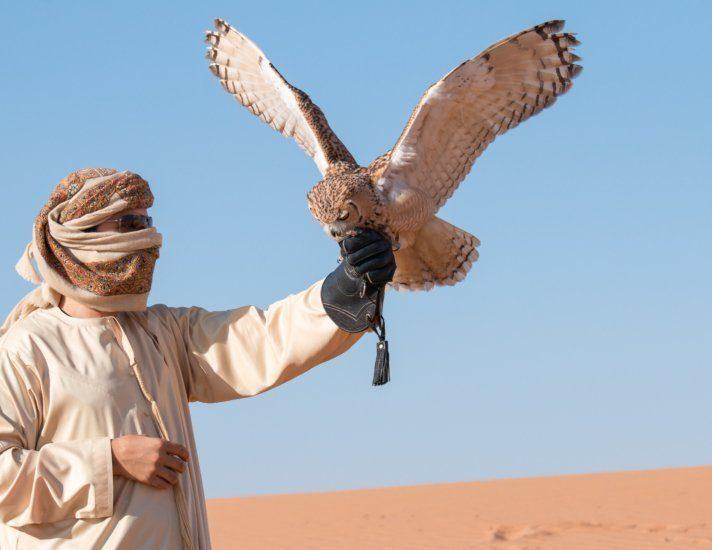 Young male pharaoh eagle owl (bubo ascalaphus) during a desert falconry show in Dubai, UAE.