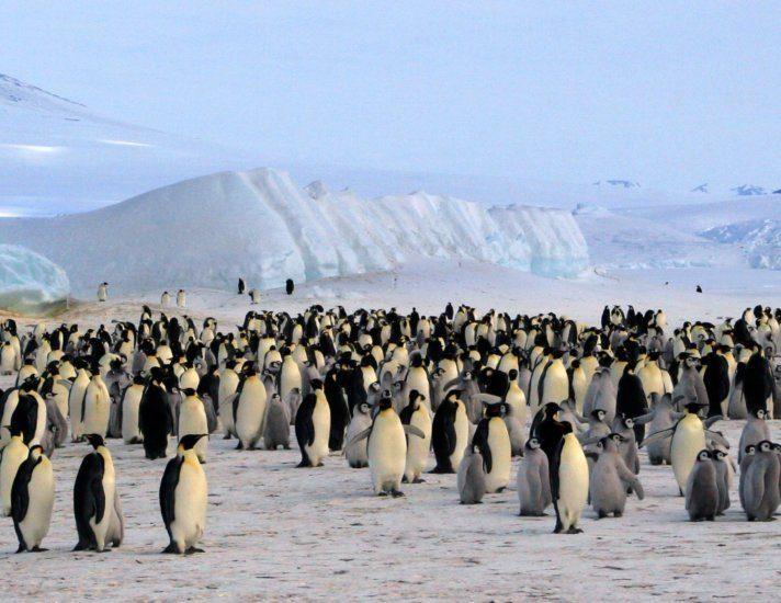 Colonie de manchots empereurs (Antarctique, Mer de Ross)
